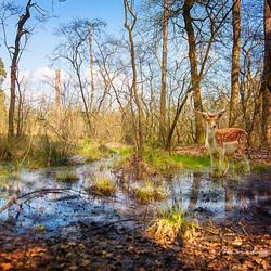 Aan de rand van het bos....
