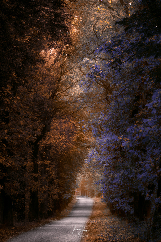 Road to magic forest -