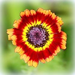 Kleurrijk bloemetje