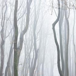 genieten in het bos