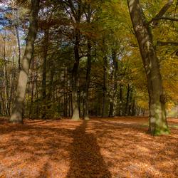 Oranje deken met schaduw van de bomen