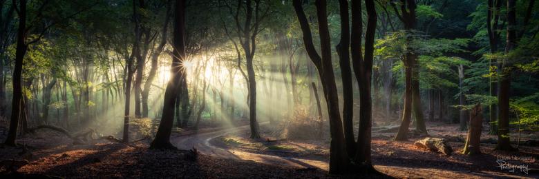 Panorama in het bos - Een mooie ochtend in het bos rond de langste dag van het jaar.