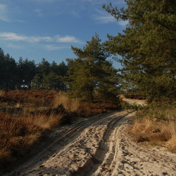 Zandpad over de Kalmthoutse heide