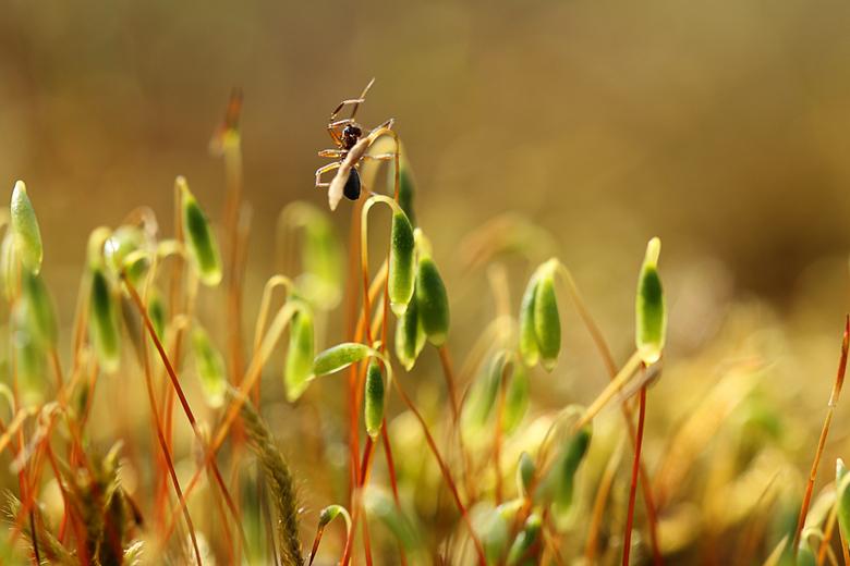 mier on top  - beklimming van bloeiend mos in tegenlicht
