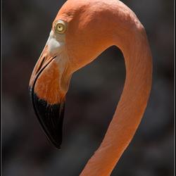 Flamingo Canon 650D test