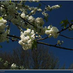 Voorjaar in het Hofpark