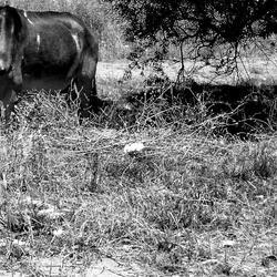 Sad donkey in the shadow