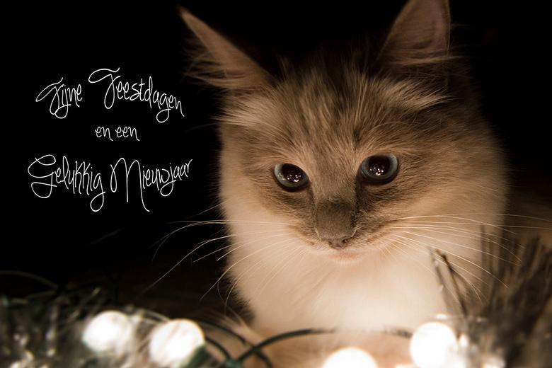 Fijne Feestdagen En Een Gelukkig Nieuwjaar Portret Foto Van Djer Zoom Nl