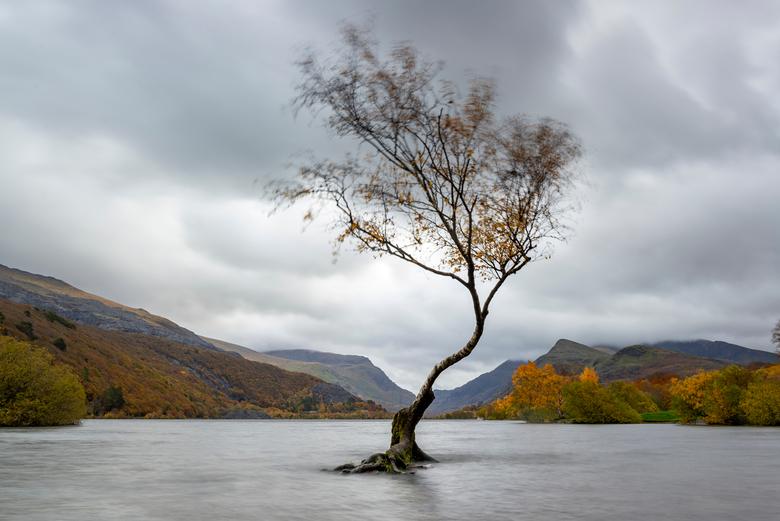 Wales, lonely tree - Iconisch boompje in Wales, gemaakt met een iets langere sluitertijd waardoor de beweging van de takken door de wind goed is te zi