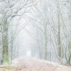 Winterlaantje...