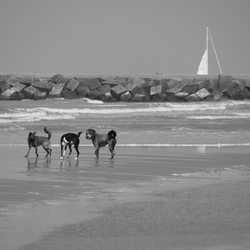 Strandhonden
