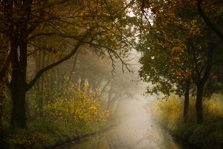 Mistig herfst - Mist en herfst, wat een prachtige combinatie.<br /> <br /> Wat een heerlijk seizoen is dit toch!