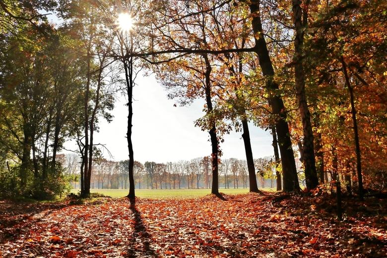 Herfstsfeertje 1