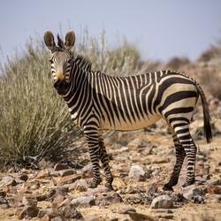 Namibië 9