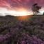 Zonsondergang op de Zilvense Heide
