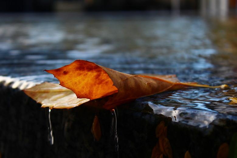 blad - Water op een blad