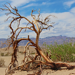 death for life, death valley