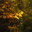 lichtend blad