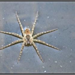 Spin rust op het water