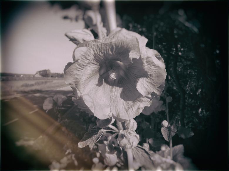 Central Flower -