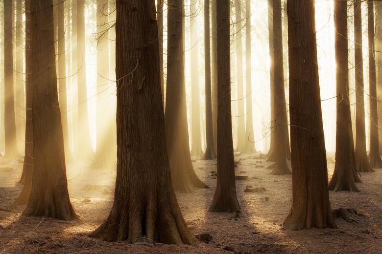 Verblind door het licht ... - Een mooi moment op een mooie herfstochtend ...