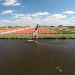 windsurfing with foil in a ditch near the tulip fields