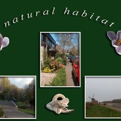 Natural Habitat