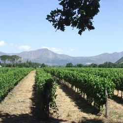 Winelands Zuid Afrika