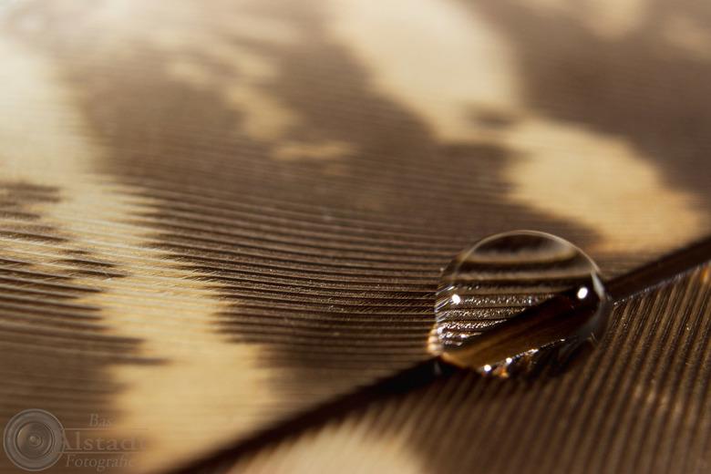 "Pearl on a feather - Druppel water op een veer. Ook opnames met meerdere druppels, maar hier bleek toch ""less is more""..."