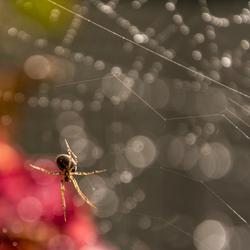 Spin in een web