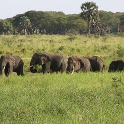 olifanten naast de weg