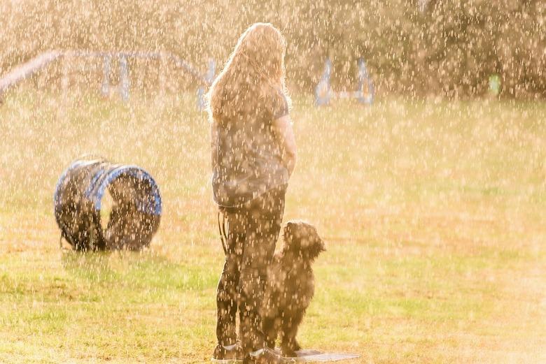 Hondenweer - Zelfs tijdens de regen wordt er hard gewerkt met de hondentraining.
