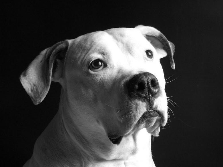 Ik wil niet op de foto!!!!!!!!!!!!! - Ben de laste tijd een beetje aan het oefenen met zijlicht en flitslicht. Helaas is onze hond Rico vaak de klos.