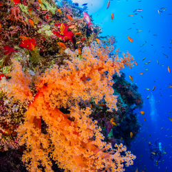 Kleurenpracht in de Rode Zee, Egypte