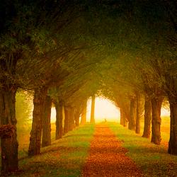 Licht aan het eind van de weg