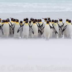 Just a few penguins