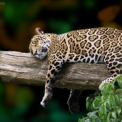 Ik ben zo vreselijk moe!!!