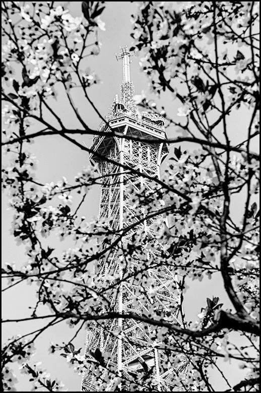 Paris 05 - Soms zijn wij fotografen geneigd om te veel in een te korte tijd te willen doen. Dat betekend dat we in de drukte nogal eens wat moois over
