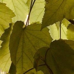 compositie met bladeren