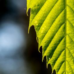 Just leaf....
