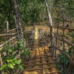 junglebruggetje