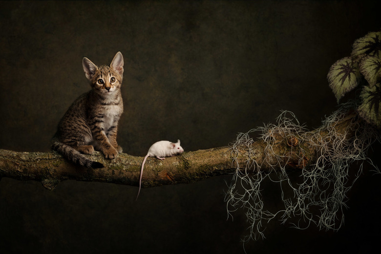 Kat en muis - Kat en muis