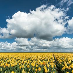 Wat kunnen de Polders dan mooi zijn :-)