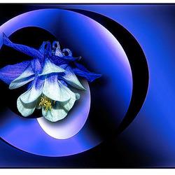 Blue Monday...............
