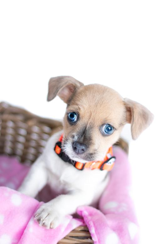 Newborn puppy shoot