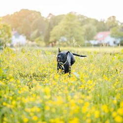 Hond Bella