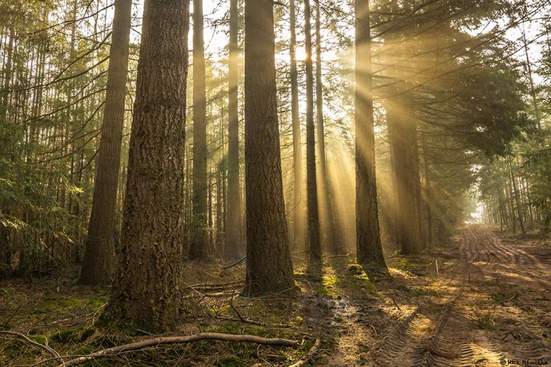 Light Beams - Dit vindt ik toch wel één van de interessantste soort foto's die je kan maken tijdens zonnige en mistige/heiige omstandigheden! Na
