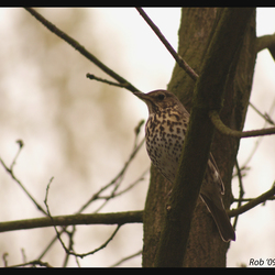 bird shot