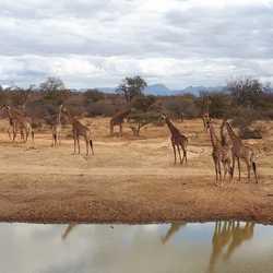 Family in Africa