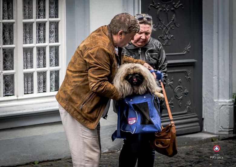 doggybag - Ik zie steeds vaker dat de hond, afstammeling van de wolf, wordt doorgefokt tot een knuffeldier dat je kan, en vaak moet, dragen. Net zoals